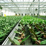 US New Asia Investment GMO Plants