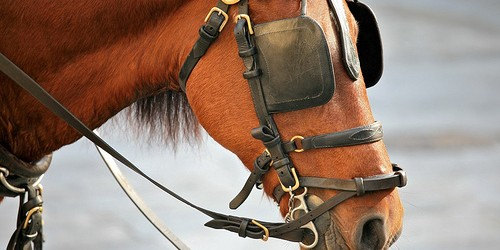 Horse with Blinkers